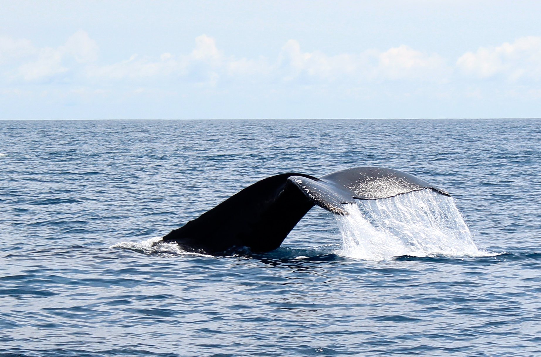 whale-breaching-with-tail-slap